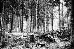 Aiguille (i'freaks) Tags: forest wood bois forêt sapin black white noir et blanc chamrousse nature tree