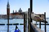 IL Gabbiano 2 (Gina.Di) Tags: venezia venice gabbiani veneto lagunaveneta italia canon60d sangiorgiomaggiorevenezia rivadeglischiavoni chiesadisangiorgio