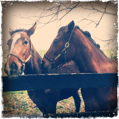 Horse farm. Spring. Lexington KY