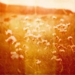 Warmth. (caballosblancos) Tags: sx70 hazy film 779 expired roidweek polaroidweek polaroid