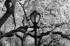 LampPost I (Joe Josephs: 3,122,834 views - thank you) Tags: centralpark landscape landscapephotography manhattan nyc newyorkcity spring springcolor springtime travel travelphotography cityscape exploring joejosephs outdoorphotography parks quiet scenic serene tranquil urbanexlporation urbanparks ©joejosephs2017 springflowers