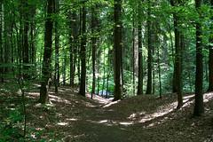 DSC_2615 (oria77) Tags: dolina bolechowicka krakow valley woodland poland