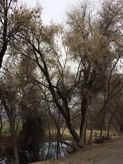 IMG_0591 (augiebenjamin) Tags: lakeviewparkway lakeshoredrive provo utah mountains provorivertrail trees spring winter spanishfork nebo bicentennialpark oremcity provocity utahvalley utahcounty oremarboretum