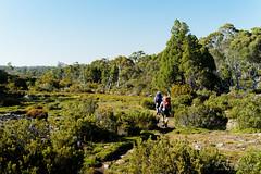 20170302-12-Walking out in morning light (Roger T Wong) Tags: australia greatpinetier np nationalpark sel70300g sony70300 sonya7ii sonyalpha7ii sonyfe70300mmf2556goss sonyilce7m2 tasmania wha wallsofjerusalem worldheritagearea bushwalk camp hike morning trektramp walk