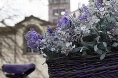 dettagli in lilla dalle Mura (Paola Petroni) Tags: lilla lucca mura bicicletta tr
