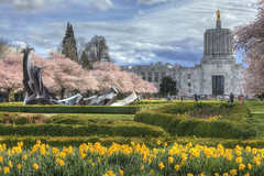 Spring Has Sprung! (Ian Sane) Tags: ian sane images springhassprung oregon state capitol building mall salem travelsalem cherry blossom trees pink daffodils flowers yellow landscape photography canon eos 5d mark ii two camera ef70200mm f28l is usm lens sculpture tommorandi weltzinblix spraguememorialfountain