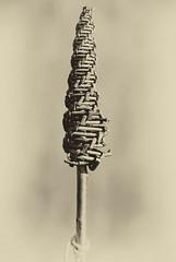 The Weave (BrotherBloat) Tags: ifttt 500px london wetland centre wwt decoration marker pole stick trinket ward weave wicker