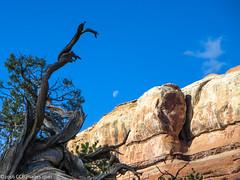 Moon and Tree (CCBImages) Tags: canyonlandsnationalpark druidarch needlesdistrict ©2015ccbimagescom ©2016ccbimagescom moab utah hike