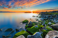 Mossy Sunset (michaelsabijon) Tags: sunset moss richmond landscape garry point park beautfulbritishcolumbia canada canoncanada