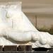 Israel-04793 - A Roman Foot.......