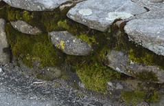 Moss & Stones (RockN) Tags: retainingwall april 2017 moss lichens worcester massachusetts newengland
