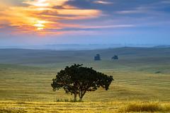 Ruhama Badlands (xnir) Tags: ruhama badlands landscape israel travel outdoor trip sun sunrise nir nirbenyosef xnir