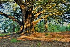 Deep Rooted (Gadgetman@Nikon) Tags: elements