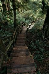 Board walks of Tofino (rianplante1) Tags: tofino vancouver island canada vancouverisland britishcolumbia british columbia nature forest hiking boardwalks landscapes pnw