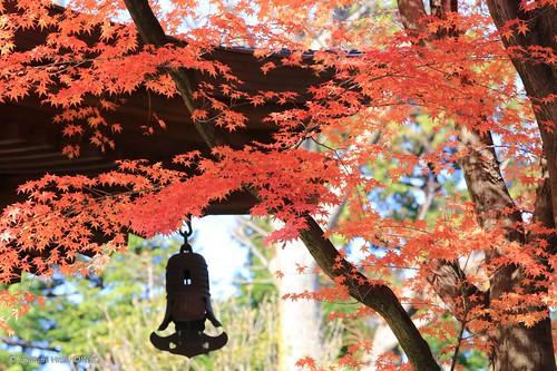 Gotoku-ji Temple