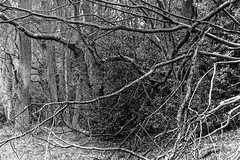Tangled Branches (Hyons Wood) (Jonathan Carr) Tags: wood tree trees ancient woodland branches abstract abstraction 6x9 rural northeast bw black white monochrome toyo45a