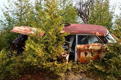 IMG_2619 (Irina Souiki) Tags: rusty crusty cars mcleansautowreckers milton ontario old oldcars