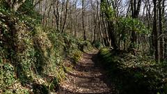 Chemins ruraux de Bretagne (claude 22) Tags: bretagne breizh cotes armor louannec trégor argoat campagne france verdure bois nature