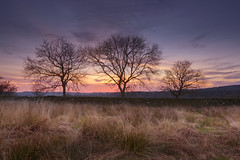 Sunset (John__Hull) Tags: bradgate park sunset clouds spring newtown linford old john leicestershire charnwood landscape countryside nature trees stone wall dry nikon d3200 breath taking landscapes
