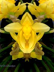 (christine chardon) Tags: fleurs flowers flores fiori innommés creatureart creaturedesign creation creature nature plante botanic photoart masque personnage fantastique mysterious printemps spring jaune yellow