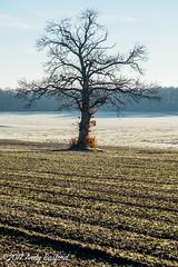 Lone tree, the Nièvre, January 2017 (serial_snapper) Tags: républiquefrançaise landscape tree nièvredépartement bourgognefranchecomtérégion ciez bourgognefranchecomté france fr