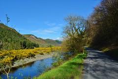 DSC_0038 (stephanie.burgess97) Tags: pontrhydygroes ceredigion wales uk river ystwyth gorse mountains blue sky lane road shadows trees earthday spring reflections grass riverbank