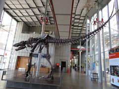 tyrannosaurus 10