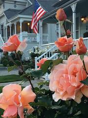 LG (patia) Tags: lg flag rose