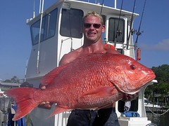 Captain Rex Williams with a Red Snapper (saltydogfishingcharters) Tags: fishing offshore guide snapper redsnapper gulfcoast fishingcharters saltydog deepsea deepseafishing orangebeachal gulfshoresal fishingcharter saltwaterfishing offshorefishing bottomfishing fishingguide perdidokeyfl gulfcoastfishing redsnapperfishing saltydogfishingcharters