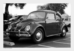 VW Beetle - C41-D76 (salar hassani) Tags: leica blackandwhite color film vw 35mm bug beetle d76 summicron beatle m6 develop c41