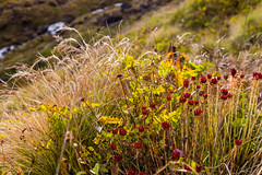 IMG_7567 (Evgeny Gorodetskiy) Tags: travel flowers nepal mountains hiking conservation himalayas ecotourism treking machapuchare