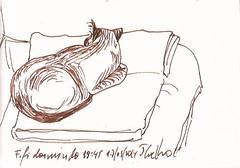 Fifi dormindo 17 maio 2014 19:47 -Tubaro Sta Catarina Brasil (Jony Coelho) Tags: cats canson santacatarina fifi tub