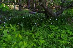 (TeiQ) Tags: leica flower tree nature japan leicam8 hourai