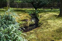 Japanse Tuin Clingendael 2014-02299 (Arie van Tilborg) Tags: japanesegarden denhaag thehague clingendael japansetuin clingendaelestate landgoedclingendael
