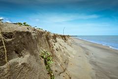 Life Matters (Muse Rosli) Tags: muse erosion malaysia beaches geology pantai kelantan