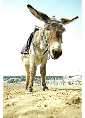 'Reggie' (james'cook) Tags: sea summer sun hot cute art film beach water sunshine animal happy photography photo seaside sand nikon mare artistic britain donkeys traditional hipster donkey sunny super photograph heat indie british summertime weston 18mm summery d7000