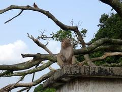 Monkey's mountain