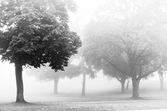 Through the Mist (Just Add Light) Tags: morning trees light blackandwhite cloud tree monochrome weather fog night 50mm bay humboldt scary driving view snapshot foggy atmosphere eerie spooky milwaukee homestead highiso outthecarwindow gnas justaddlight
