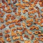 The apricots of Armenia thumbnail