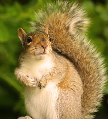 nutkin2 (explored) (Dawn Porter) Tags: bird squirrel somerset