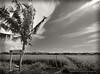Penaga, Butterworth (Micartttt) Tags: field paddy malaysia penang paddyfield butterworth penaga micarttttworldphotographyawards micartttt