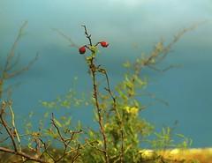 Winter Flora June 2014 (maginoz1) Tags: winter june canon australia vic 2014 bulla explored floraseed