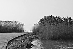 hide (somogyibarbara) Tags: winter sky blackandwhite bw white lake black cold reflection nature water contrast reeds pier rocks europe hungary waves hole path adorable hide romantic invierno lovely balaton magyarorszg sifok tl stg ndas