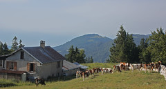 Dent de Vaulion , Ambiance d'alpage (luka116) Tags: berg montagne schweiz switzerland suisse swiss jura chalet svizzera paysage moutain montagnes vaud 2014 valledejoux dentdevaulion