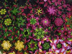 quilt top detail (_amandapanda_) Tags: modern cool quilt top optical kaleidoscope fractal kool