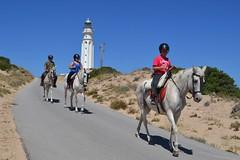 Caballos (Kamikaze GT) Tags: españa horse costa lighthouse animal faro caballo andalucía spain paseo cádiz spagna cañosdemeca lespagne spanha cabodetrafalgar