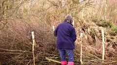 Building a dead hedge