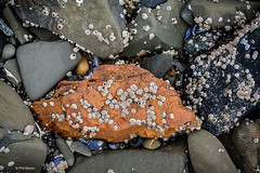Barnacle encrusted rock on the shores of the Pacific Ocean near Hoonah, Alaska (Phil Marion (177 million views - THANKS)) Tags: travel philmarion philippemarion explore phil marion canon5diii 5d3 canon toronto canada candid architecture street portrait landscape wildlife nature bird urban flowers macro insect longexposure ontario skyline cityscape home sky water outside beach dog old young indoors sunrise sunset dusk fun shadows hdr snow art model feet night shutter incredible focus happy notsony notnikon