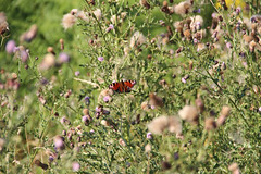 Walking in the Woods (Jenny.Lawrence) Tags: flowers trees nature field forest butterfly woods butterflies depth