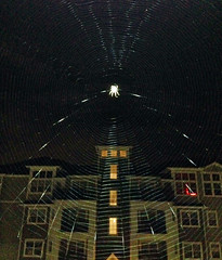Comic Book Spider Web (Ryan Polselli) Tags: halloween insect spider scary web spiderweb spooky iphone